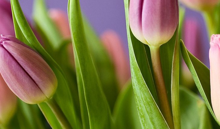 Frühlings-Blüher - Tschüss Winter
